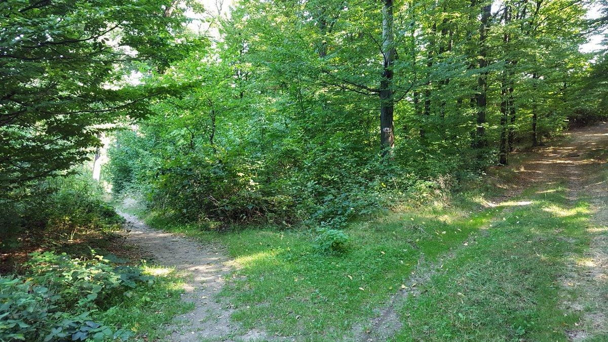 Itt a keskeny ösvényre, balra lekanyarodunk