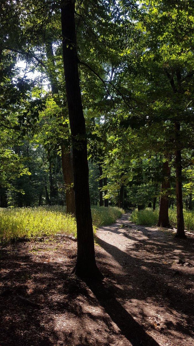 Az erdei út eleinte még kellemes és lankás
