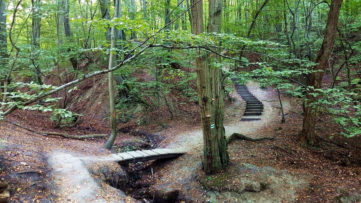 A szurdok után ismét lépcsők segítenek tovább az erdőben