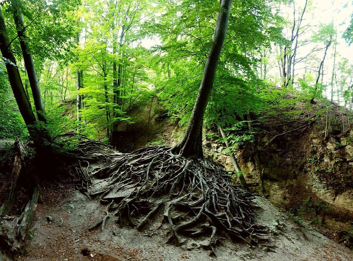 Látványos gyökérzetű fa kapaszkodik a sziklába