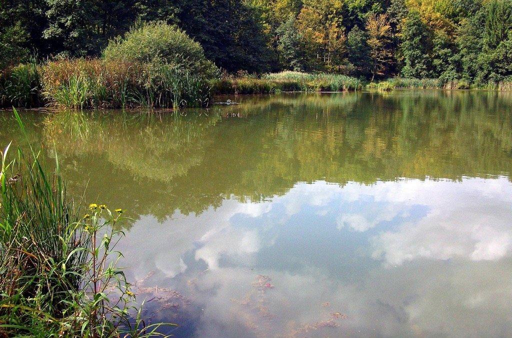 Jó Pásztor-Kápolna és Hársas-tó túra