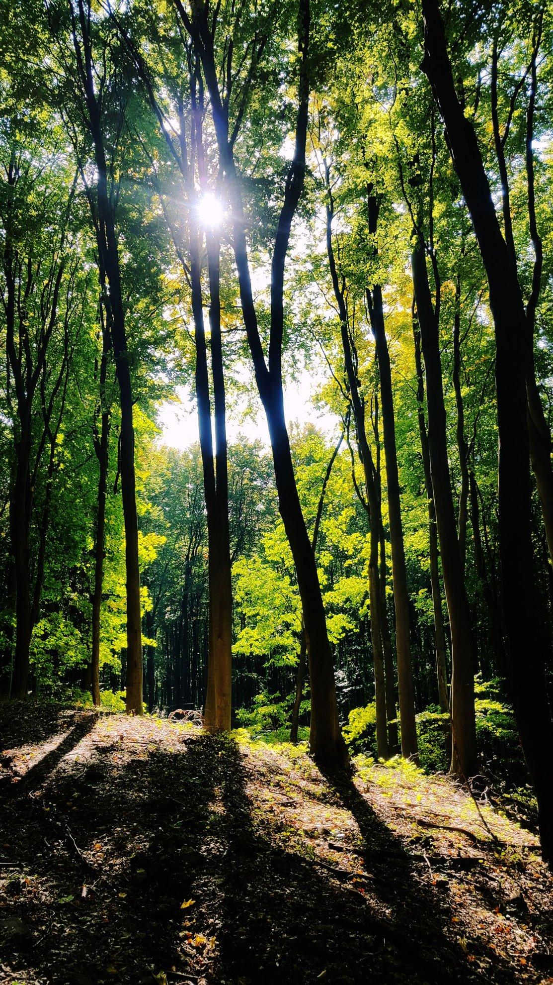 A kék sáv jelzés igazi megkönnyebbülés és nagyon szép itt az erdő.