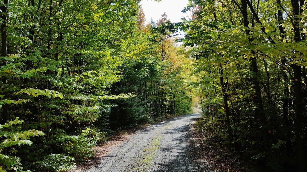 Csodás az erdő