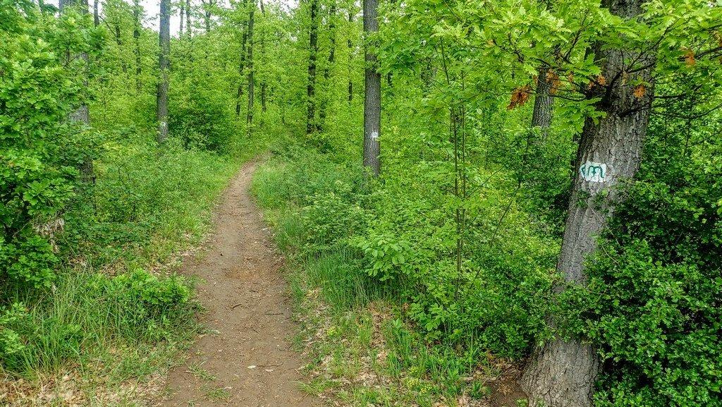 Keskeny ösvényen vezet tovább egy ideig a zöld Mária út