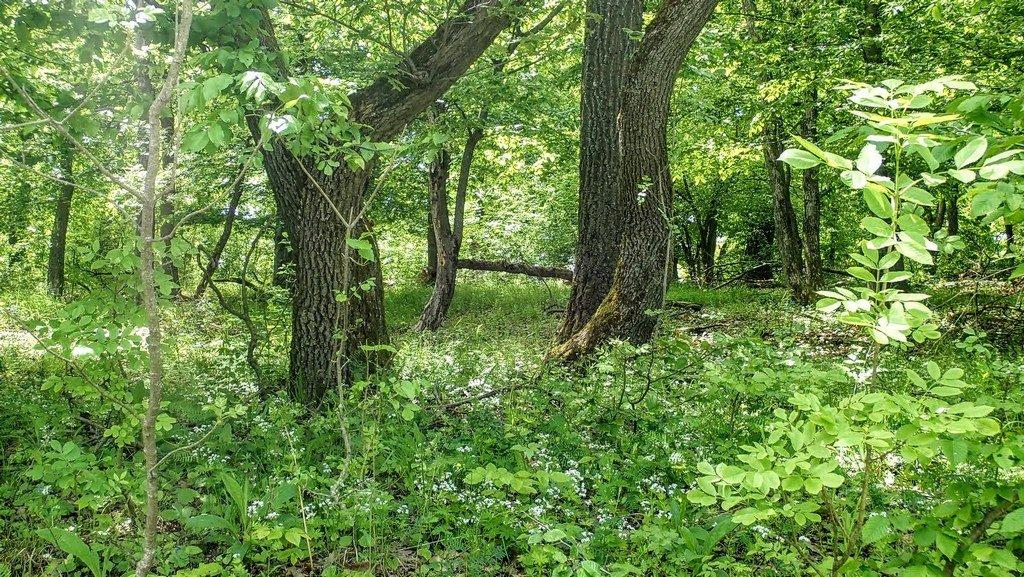 Sűrű erdő