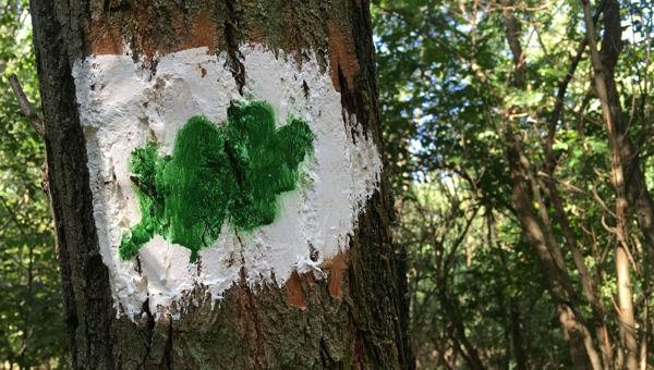 Keresztúri-erdő tanösvény