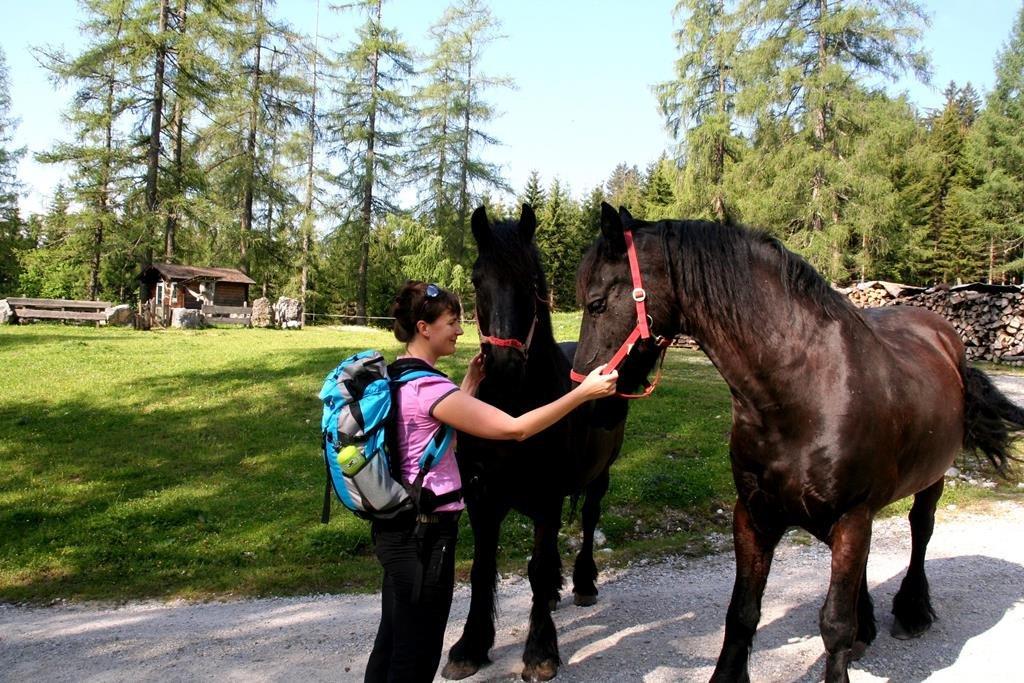 A farmon barátságos lovakkal találkoztunk.
