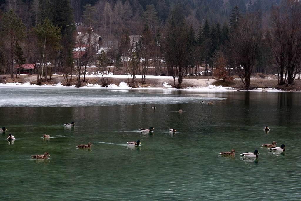 A tó megannyi vadkacsa otthona