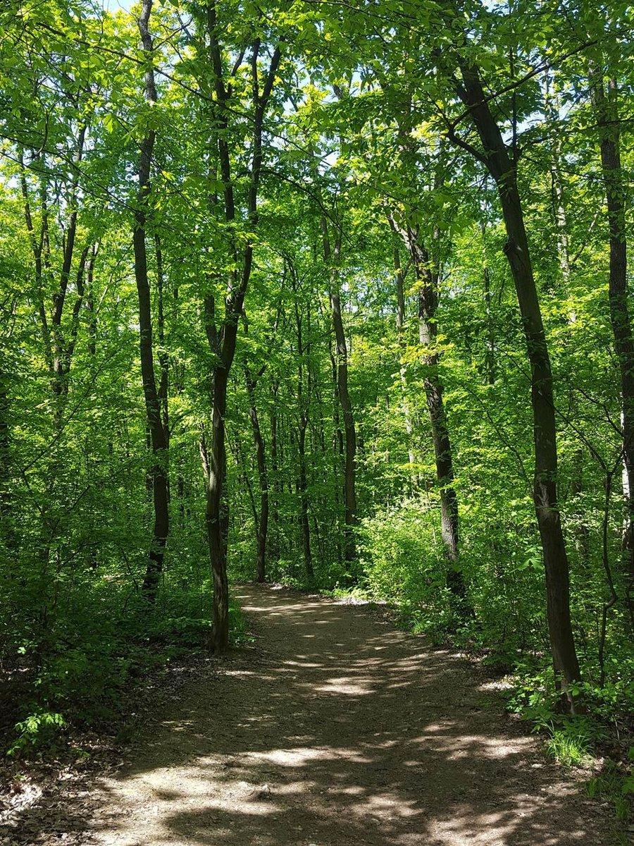 A Budakeszi Vadasparkhoz egy kb. 1 km hosszú, kellemes árnyas erdei út vezet