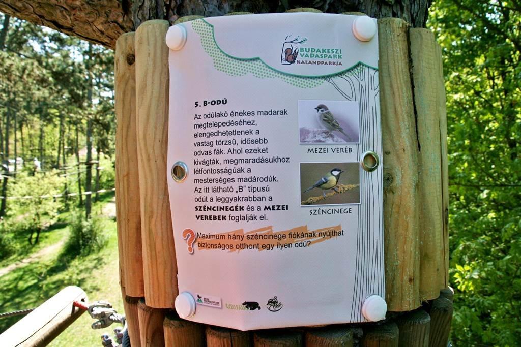 Megismerjük a madarak életét a lombkorona magasságában