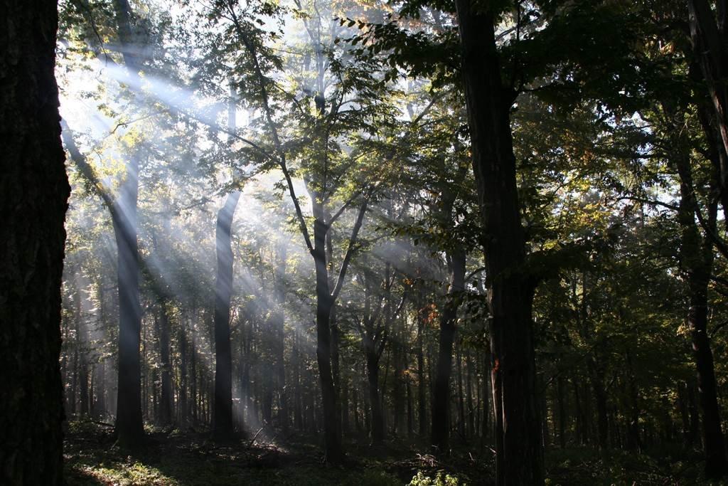 A kilátót érintetlen erdő veszi körbe