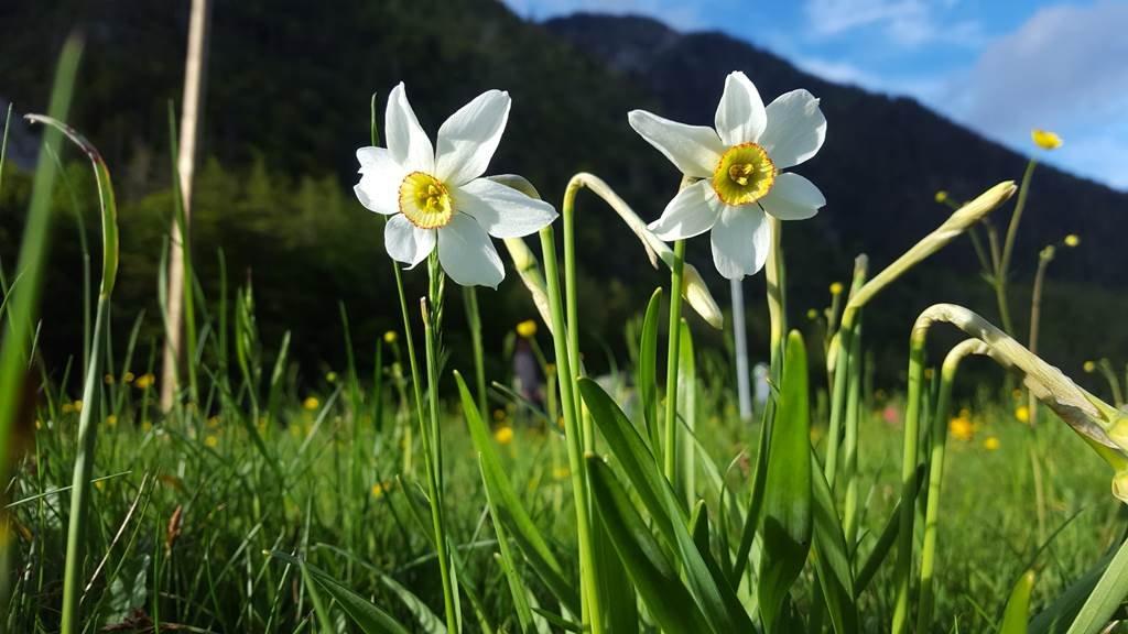 Triglav Nemzeti Park - Radovna völgy, ahol a Pr Psnak farm is található