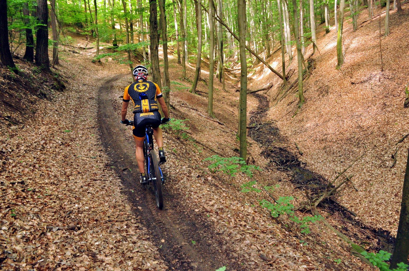 Ez a singletrail is jelzett kerékpáros ösvény