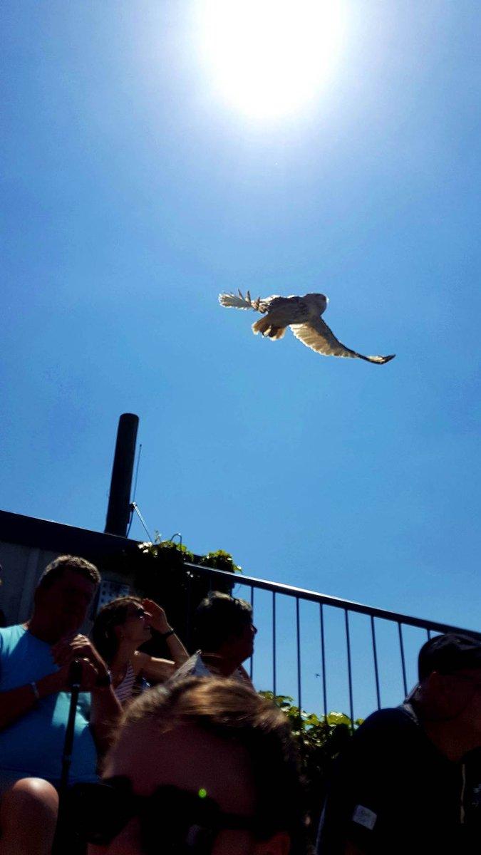 Adler show a Landskron várban
