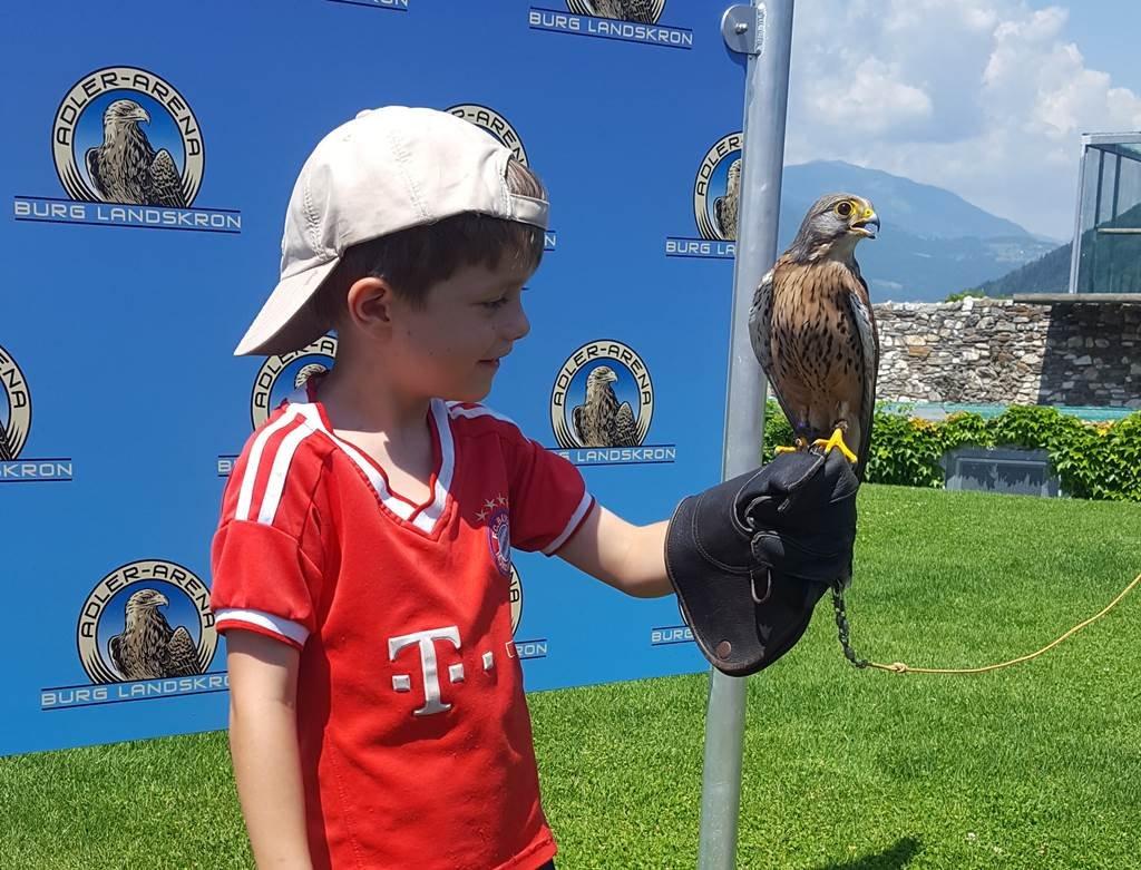 A show végén a gyerekek kézben tarthatták az egyik kis méretű ragadozó madarat