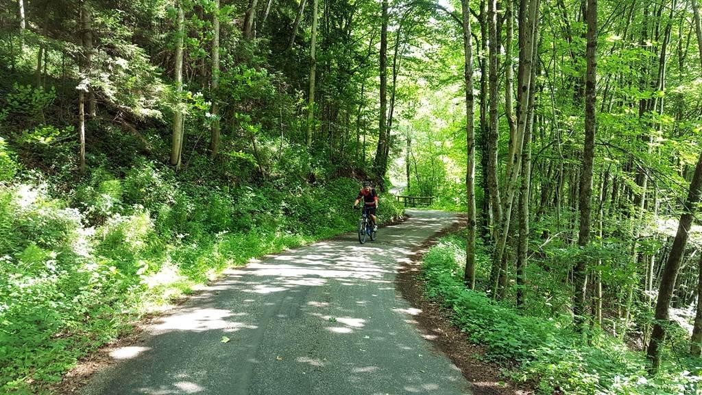 A Waidhofenhez közeli erdős szakasz