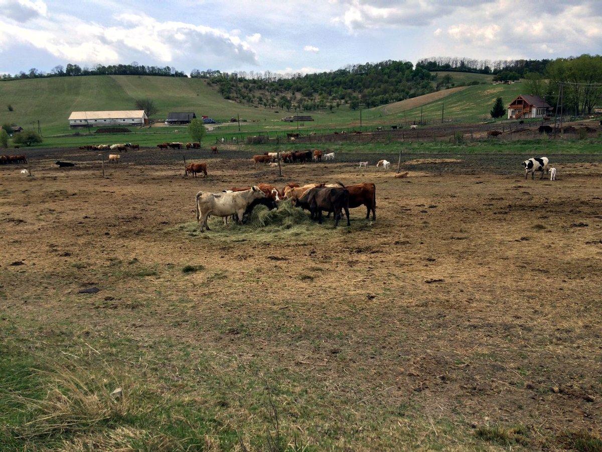Első nap - völgy mélyében elbújt farm
