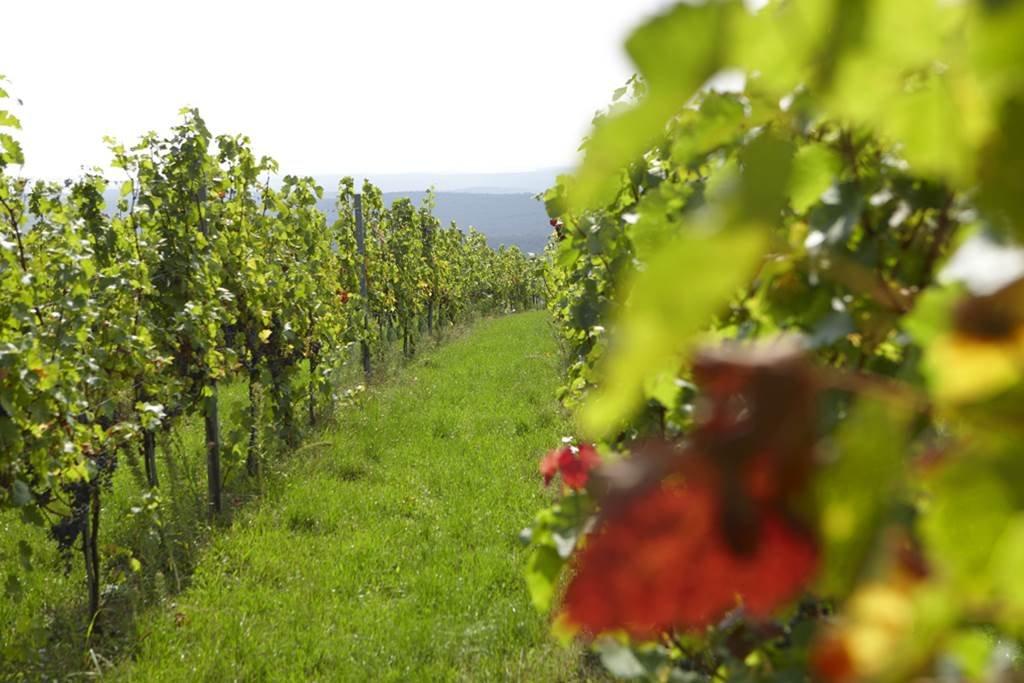 Burgenlandi szőlővidék