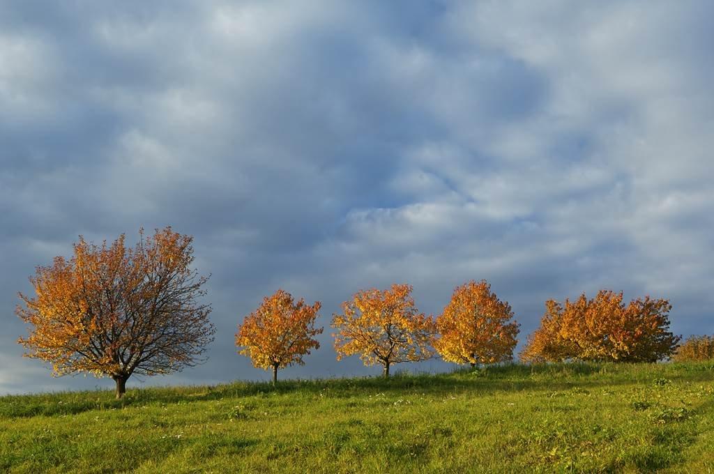 Őszi fák a Rosalia természeti parkban