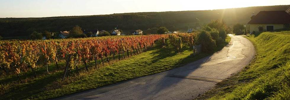 Bringázz, fuss, túrázz Burgenlandban ősszel is - izgalmas programok várnak!