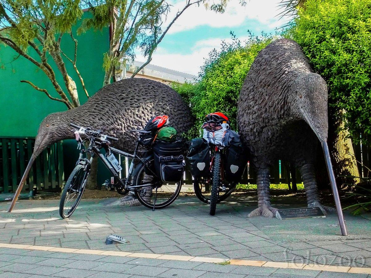 Új-Zéland a kivik hazája. Sajnos nagyobb eséllyel találkozunk velük szobor formájában, mint természetes élőhelyükön.