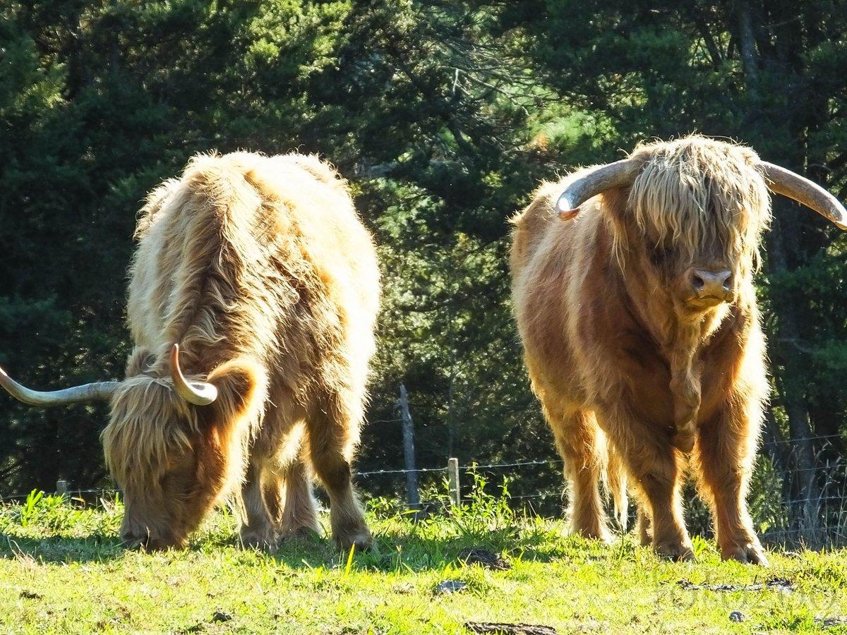 Ki mondta, hogy Új-Zélandon nincsenek félelmetes állatok?