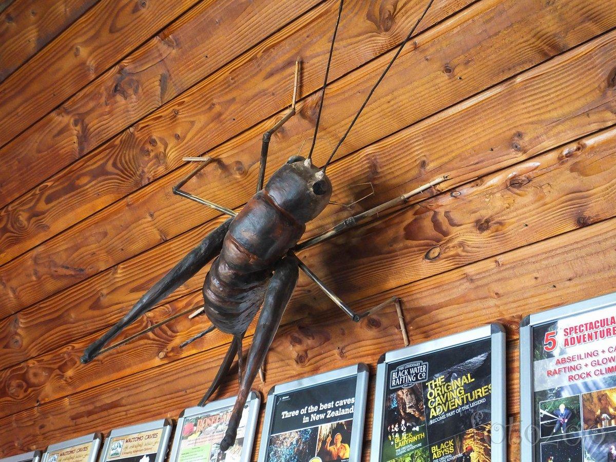 Óriás weta. Nem igazi, de igazán kíváncsivá tett. Egy ilyen rovartól mindenki bogaras lesz.