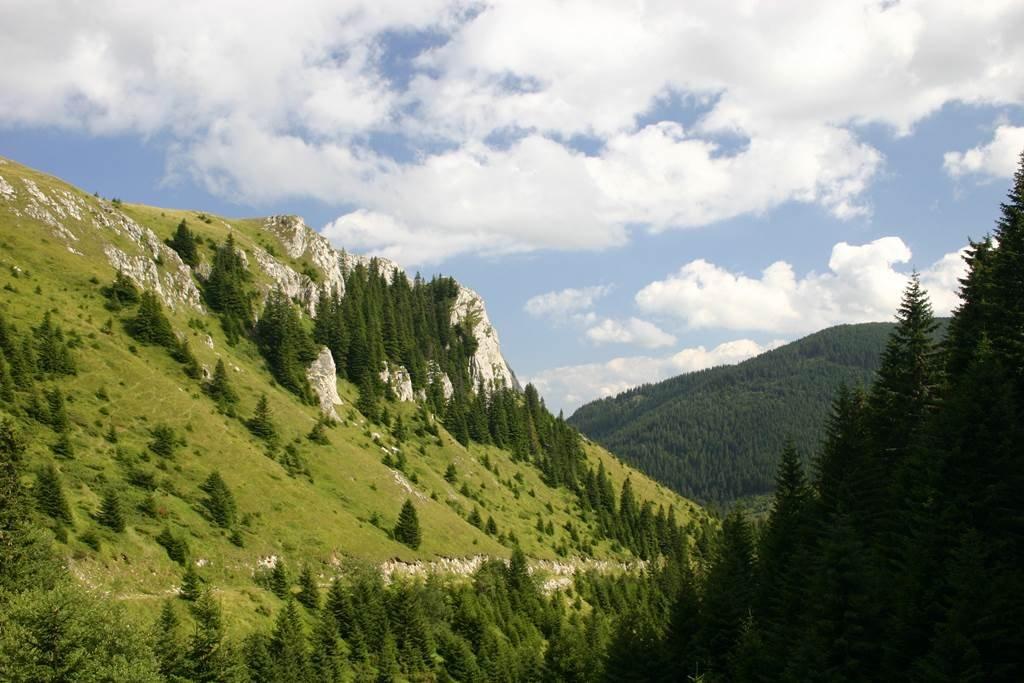 Kopaonik síterep - Nemzeti Park