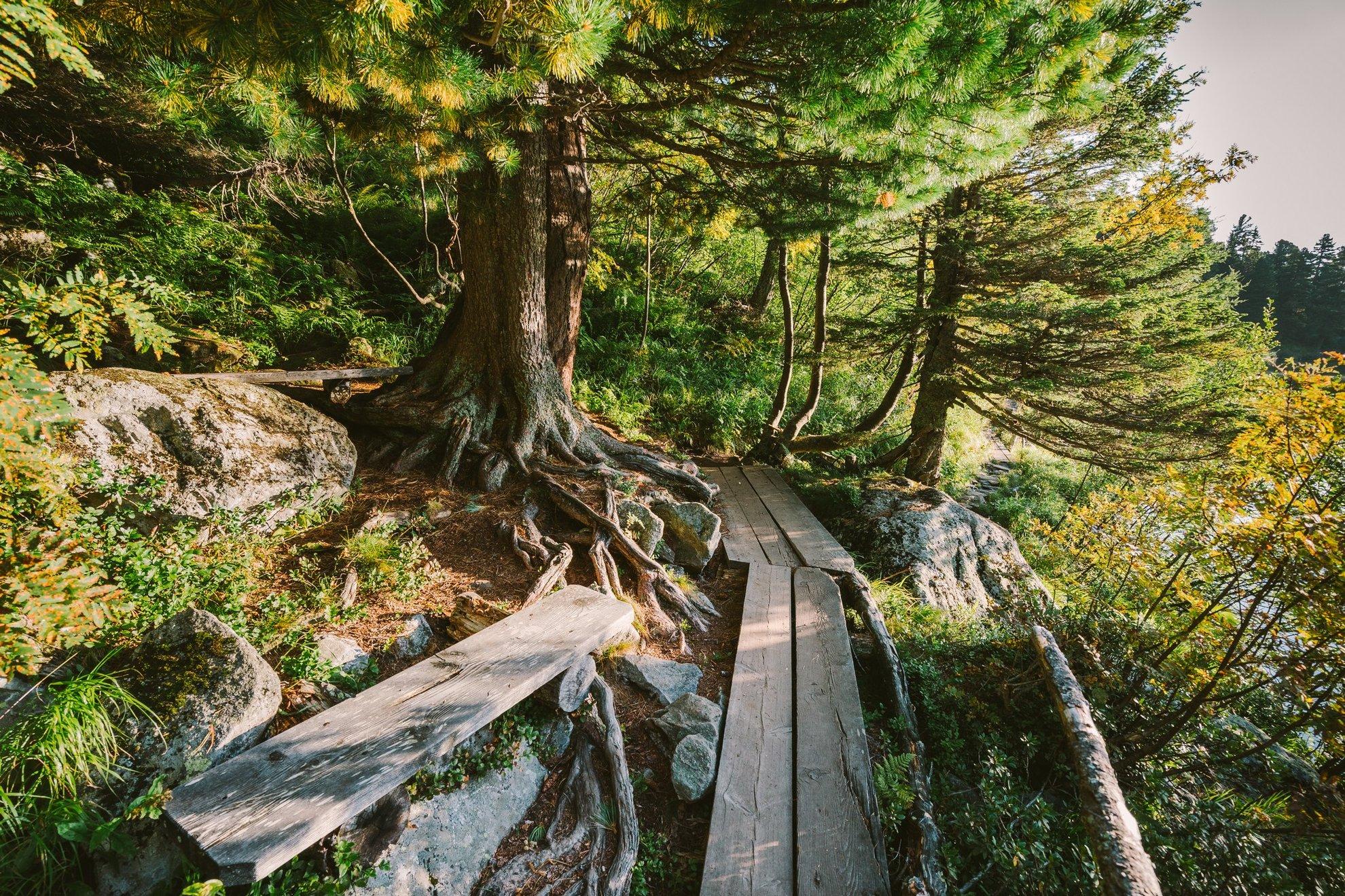 Kiépített ösvények az egyébként háborítatlan erdőben