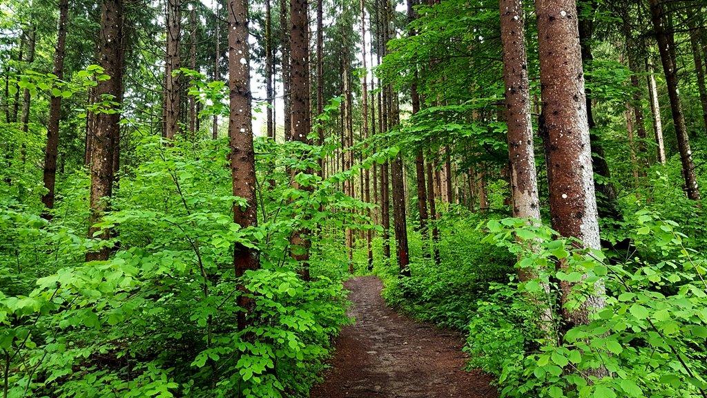 Hihetetlen érzés egy ilyen erdőn átbringázni!