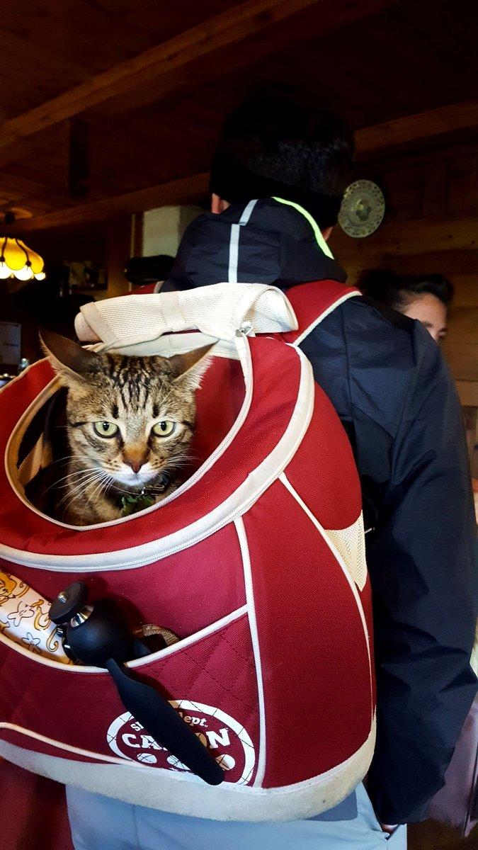 Tom cica, a vérbeli túramacska!