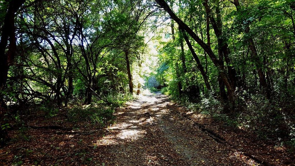 Hangulatos árnyas ösvény