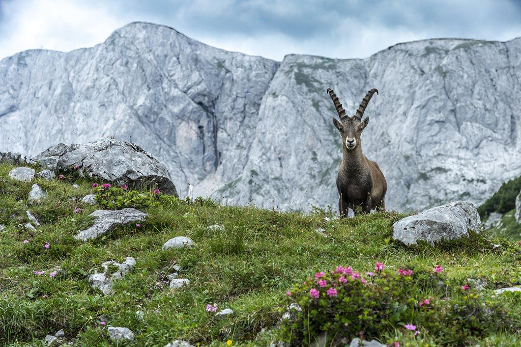 Stájer hegyvidék