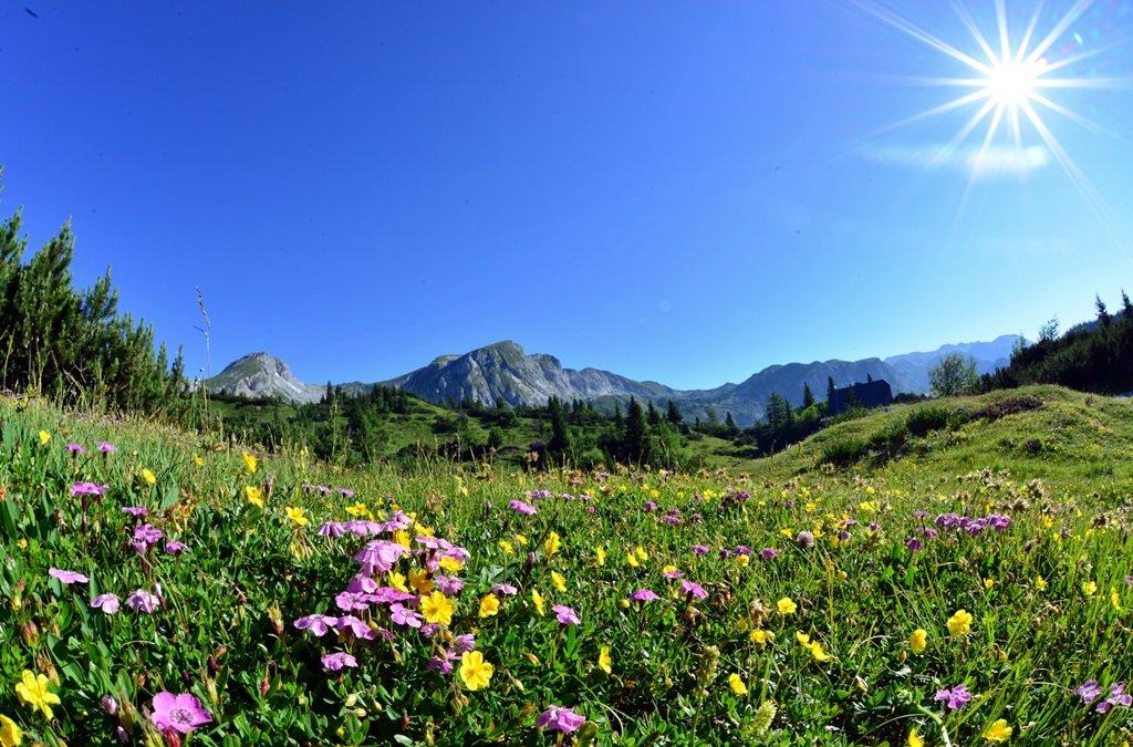 Alpesi mező virágokkal
