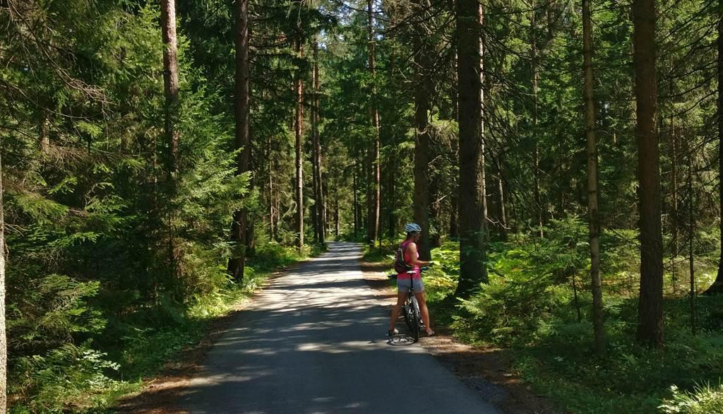 Kerékpárút sűrű fenyvesek között
