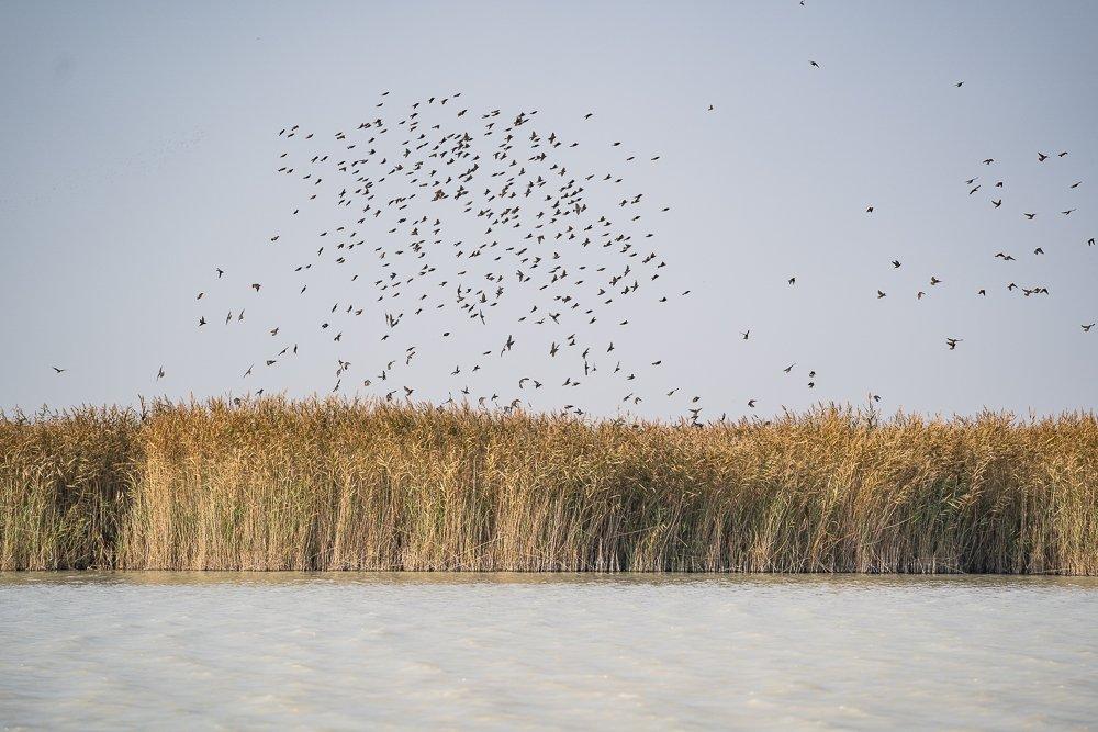 Különleges madárpopuláció a Fertő-Fertőzug Nemzeti Parkban