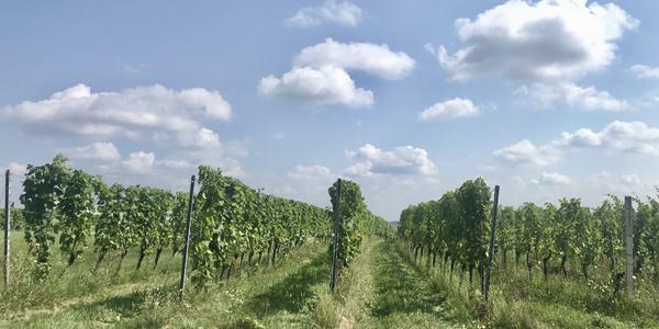 Bernstein Trail 11. szakasz Németlövő- Heiligenbrunn