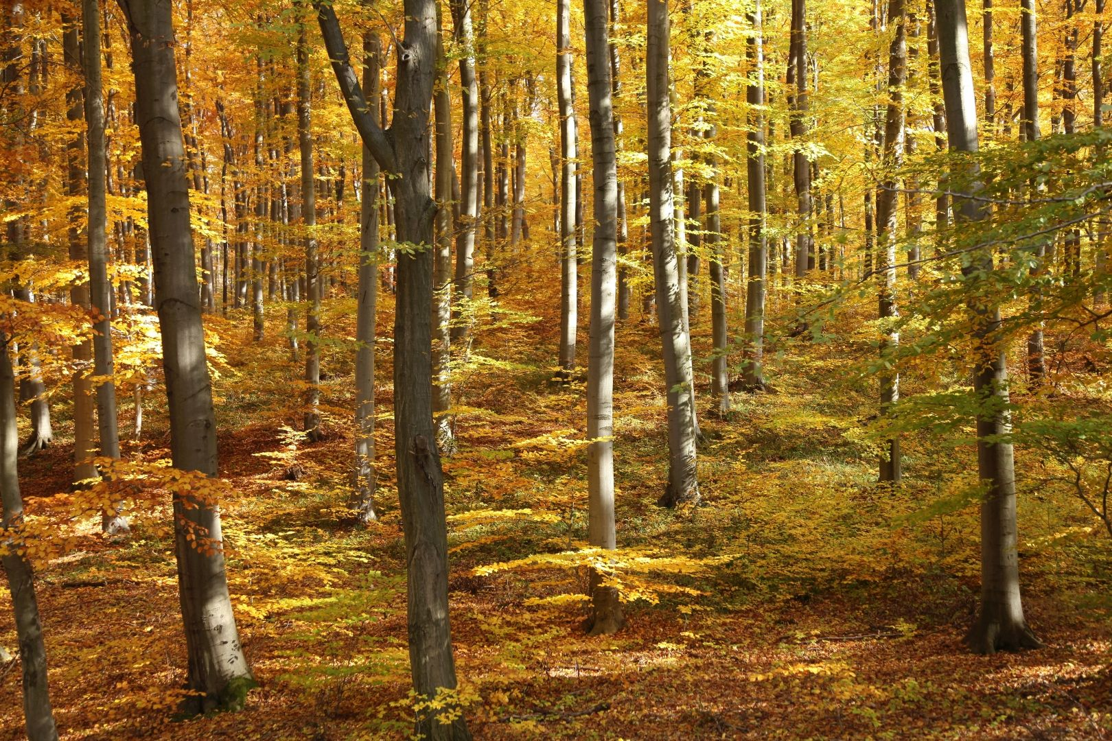 Őszi erdő gyümölcsei a Pilisi Parkerdőben-1