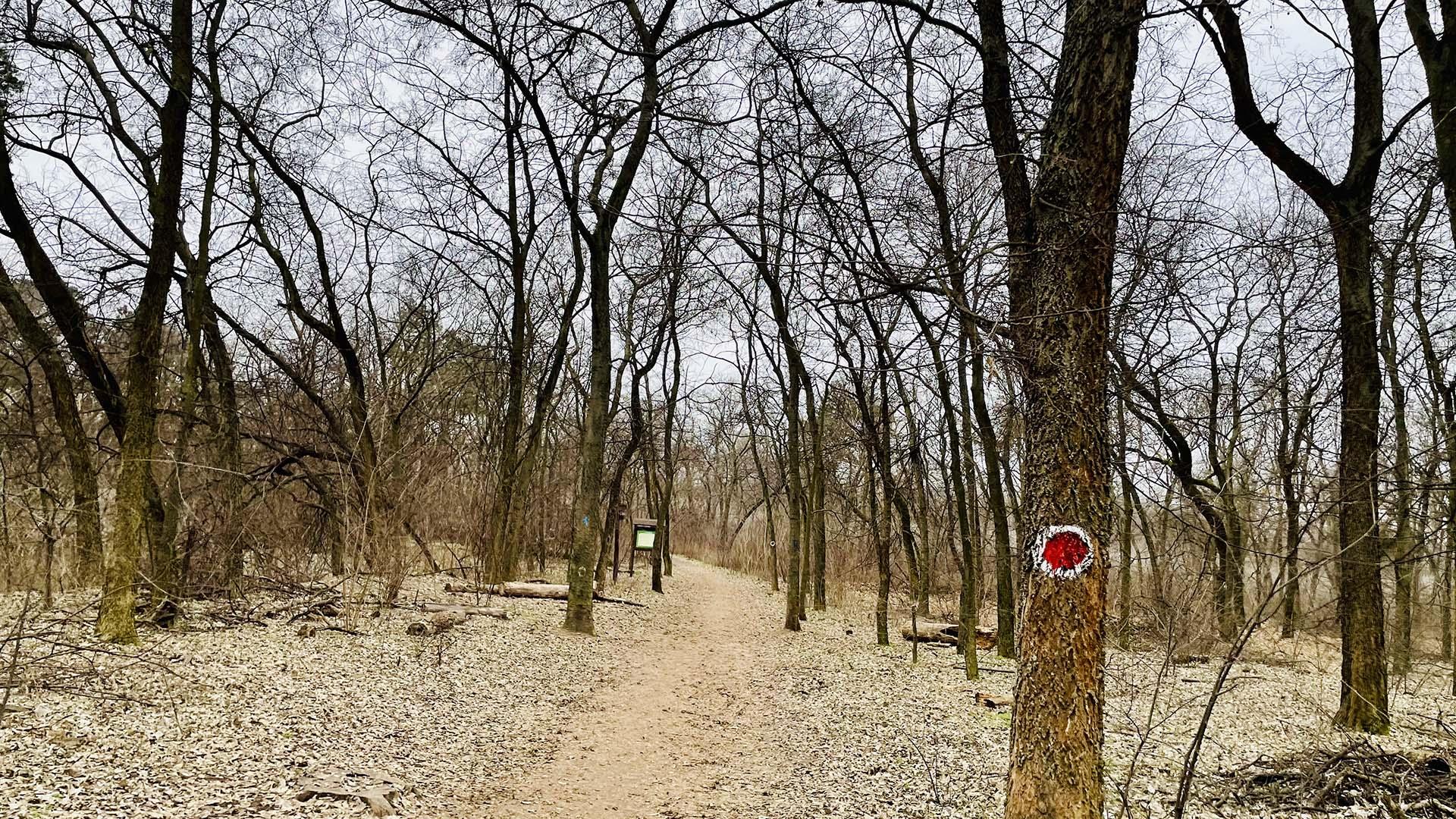 Péterhalmi erdő terepfutókör-3