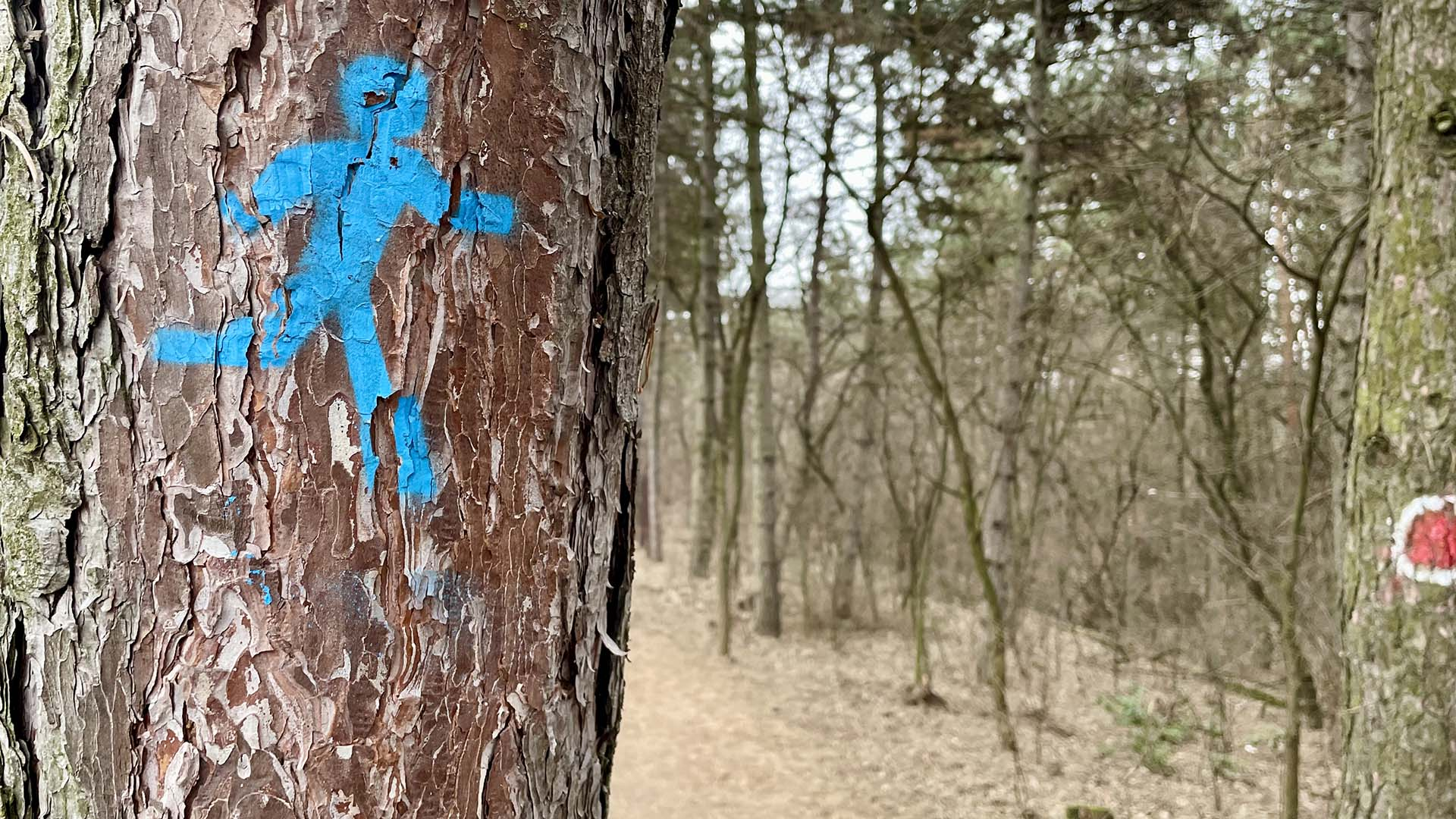 Péterhalmi erdő terepfutókör-6