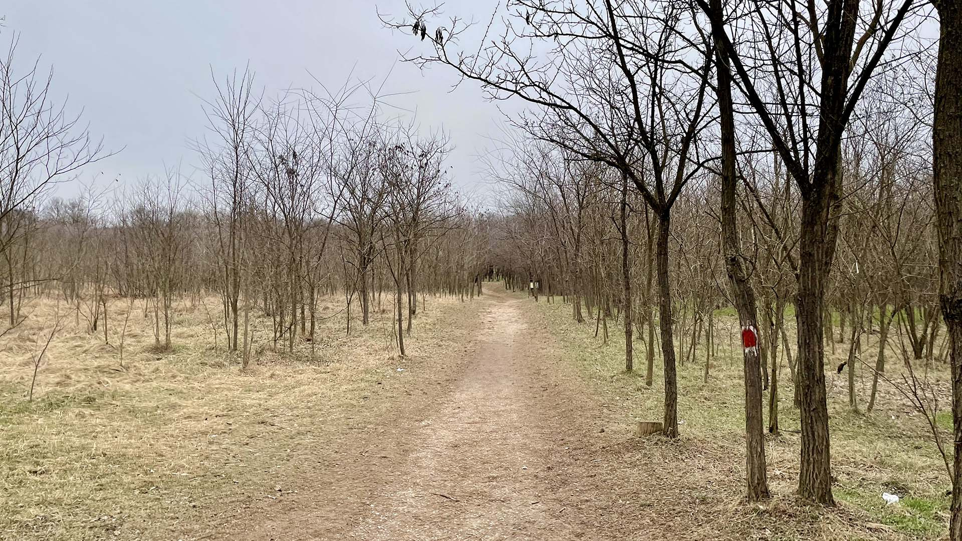 Péterhalmi erdő terepfutókör-7