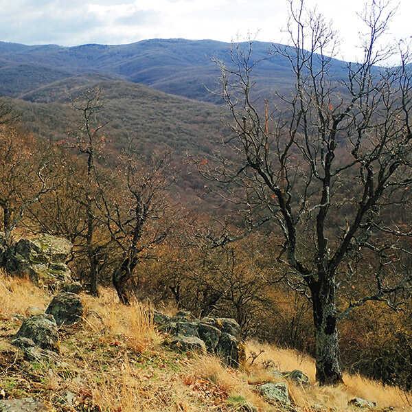 Túrázz a Magyar-hegyre, ha szereted a keményebb emelkedőket