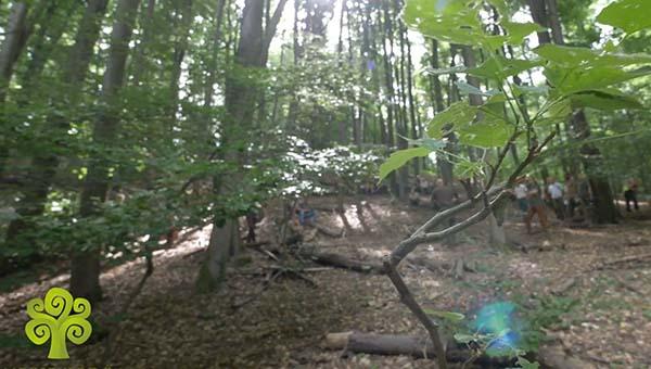 Erdőt hozunk létre, ez a munkánk eredménye